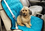 Ford Ranger Pet Travel