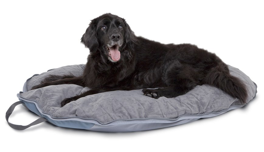 Travel Dog Bed >> Classic Accessories Dogabout Pet Folding Travel Bed Pet