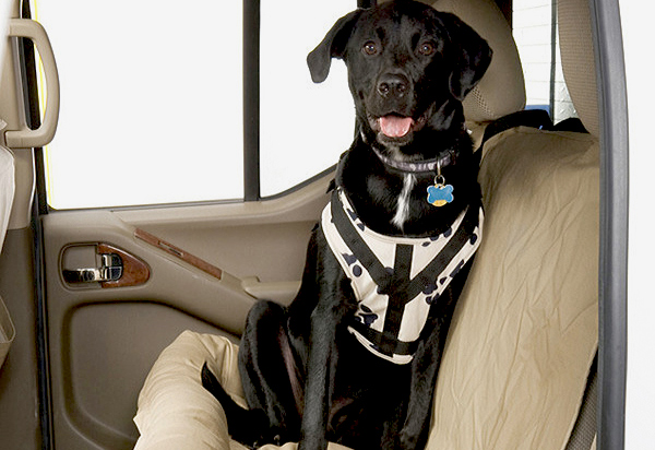 Canine Covers Buckle-Up Harness
